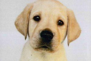 austin-puppy-colour-copy